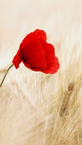 Leat We Forget Rememberance Day In2 Balance Kinesiology