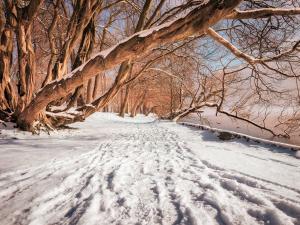 winter health calm rest